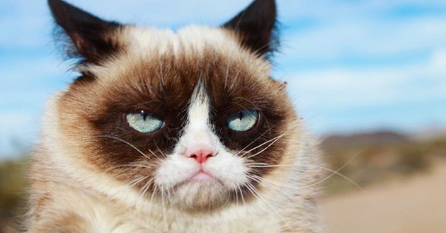 Le célèbre Grumpy Cat est mort à l'âge de 7 ans https://www.bfmtv.com/international/le-celebre-grumpy-cat-est-mort-a-l-age-de-7-ans-1693586.html#/user/logout…