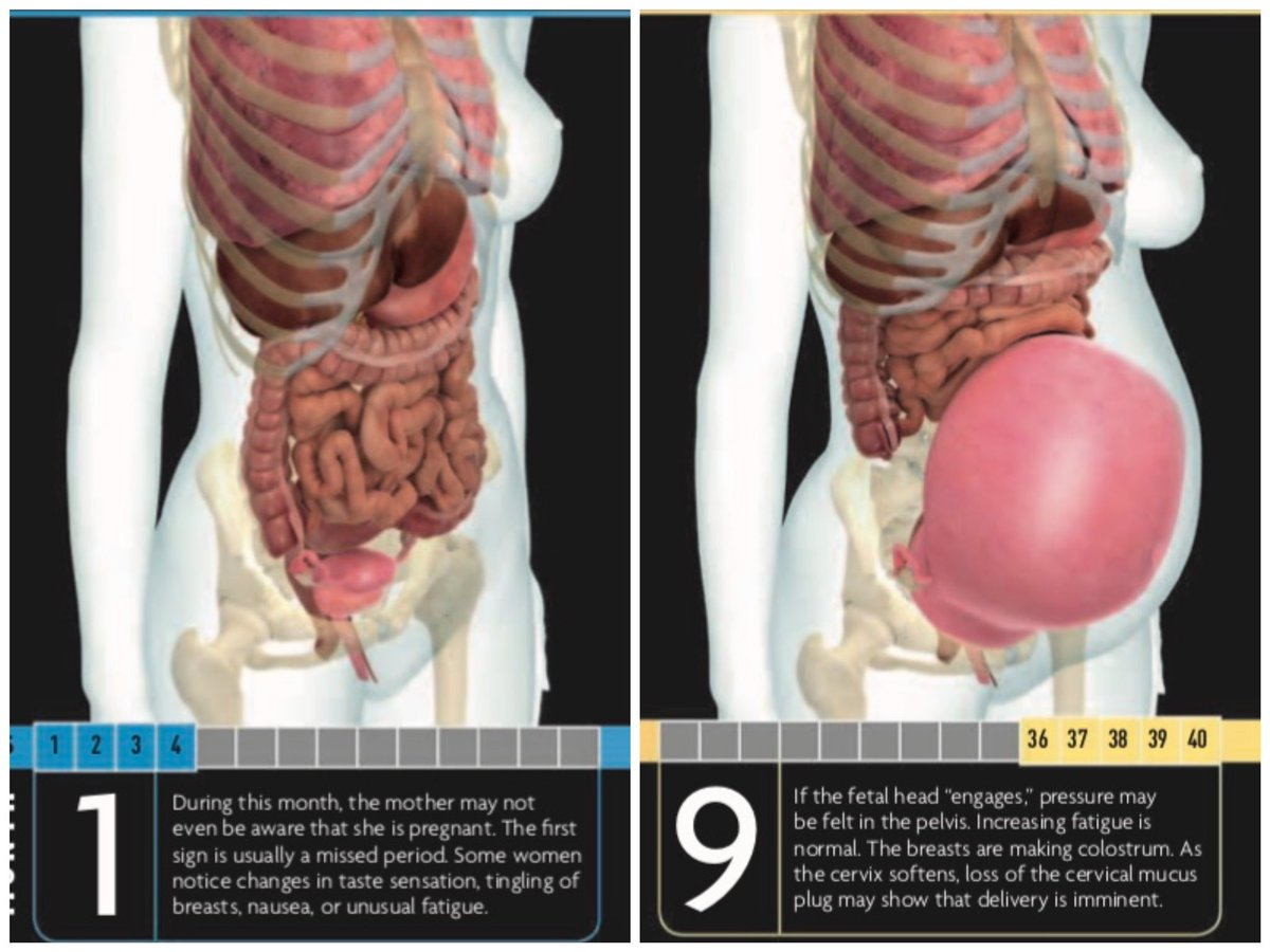 海外の書籍だからか、 妊娠月数の数え方が日本と違うけど  妊娠1ヶ月(最後の生理なので妊娠前)と臨月の女性の身体の違い。  ●便秘 ●胃の圧迫感 ●呼吸の苦しさ  はこれを見るとよくわかる。