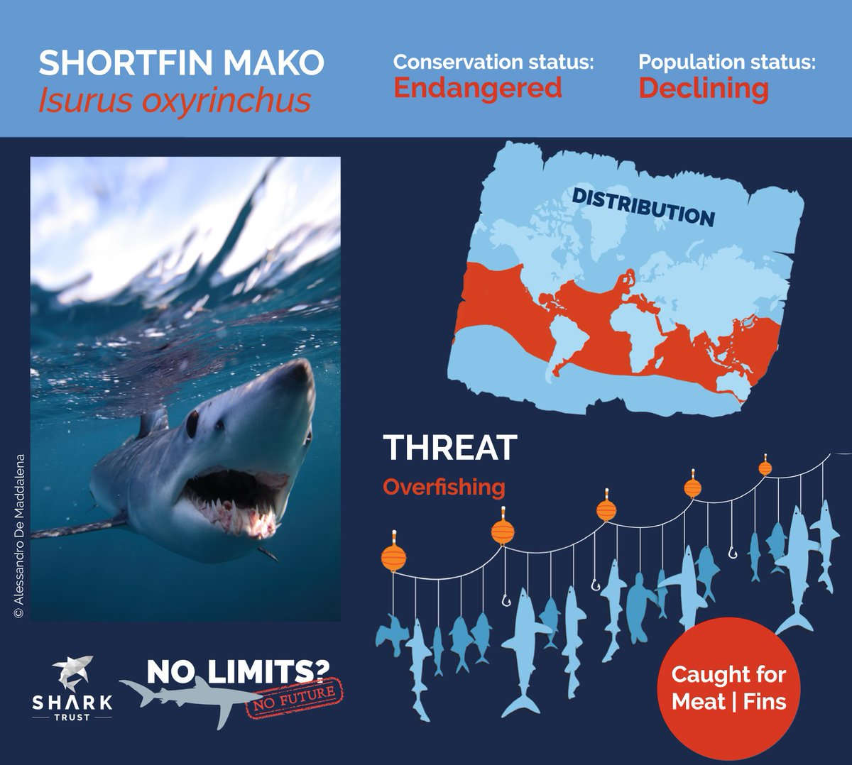 Australia must remove Mako reservations, and @CITES must list this Endangered species.  #EndangeredSpeciesDay #NoLimitsNoFuture #biodiversity