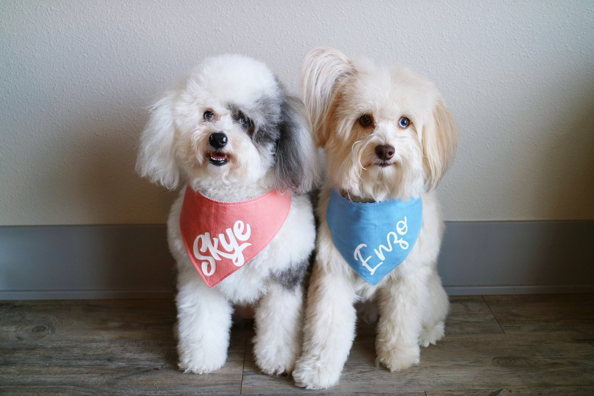 🐾 Skye & Enzo 🐾's photo on Happy Friyay