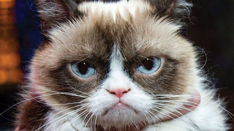 A quick clarification: I can confirm the unfortunate demise of Grumpy Cat, the feline. Former IndyCar driver Carlos Huertas, aka Grumpy Cat, however, is still alive. #Indy500