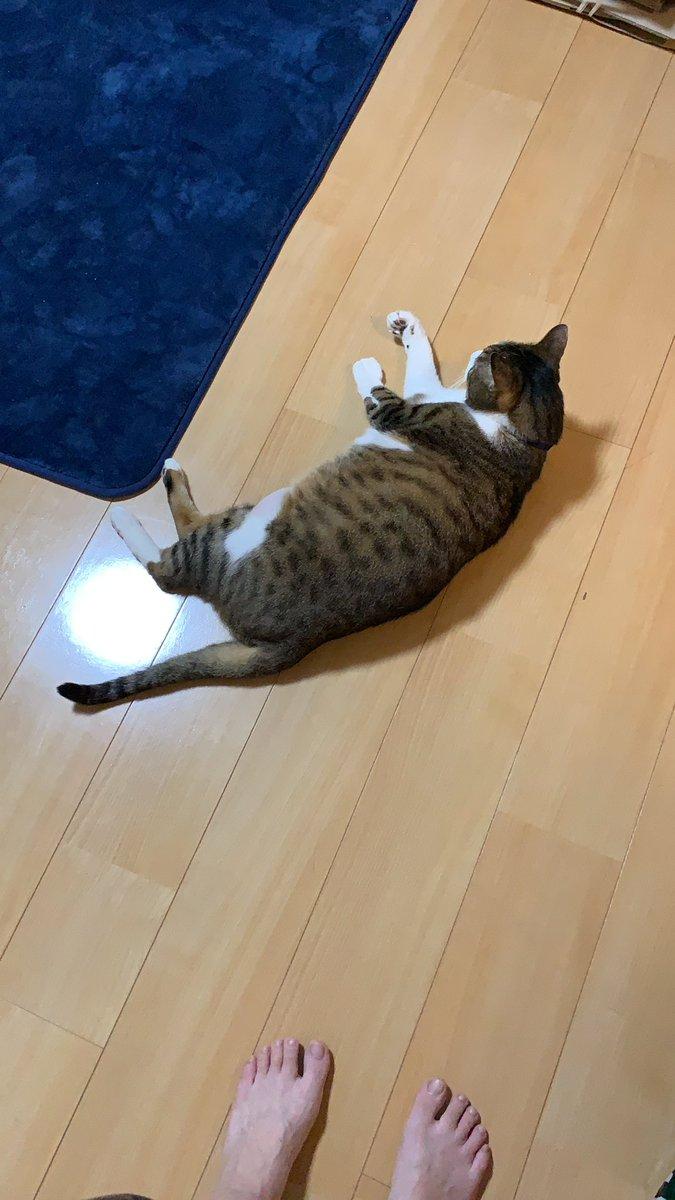 ひたすら可愛い。派遣の営業さんの実家の猫がGW中に亡くなったらしく。今日会社の面談なのに猫の話沢山した。もっと沢山遊んであげればとか、構ってあげればって絶対思うから、今の生活大事にしてくださいって言われた。そうする。小太郎もシニアに足突っ込んだからね。沢山愛情持って生きたいです