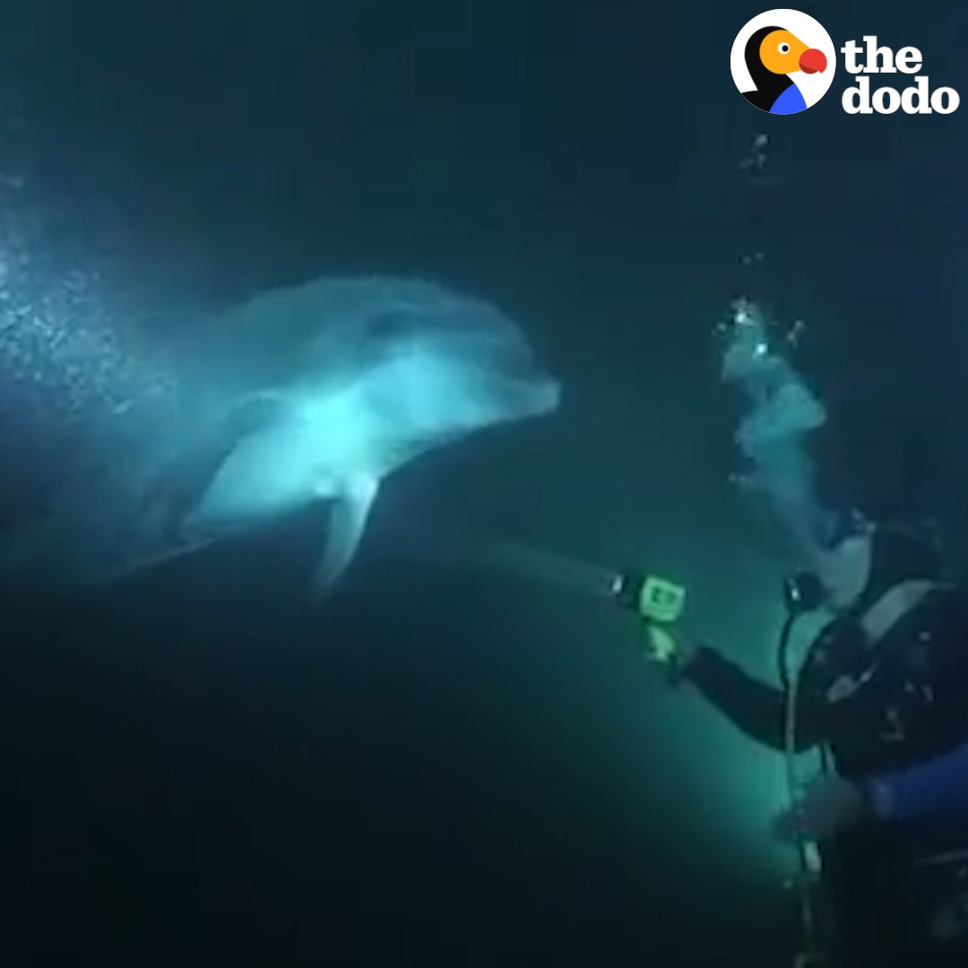 This dolphin swam up to divers to ask for help ❤️
