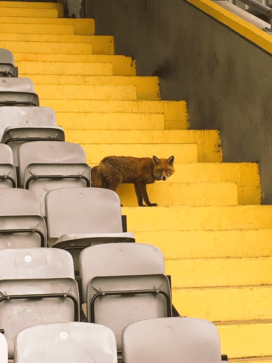 Sorry pal, the role of fox in the box is already occupied by Dinny Corcoran. 🦊⚽️