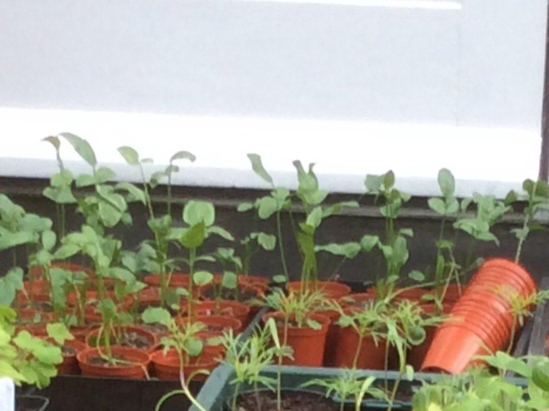 Trisha Durie's photo on #gardenersworld