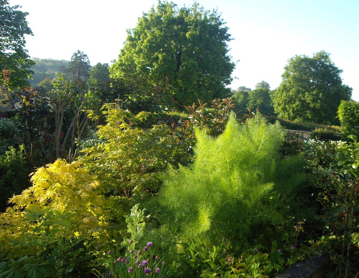 sheila jeffries's photo on #gardenersworld