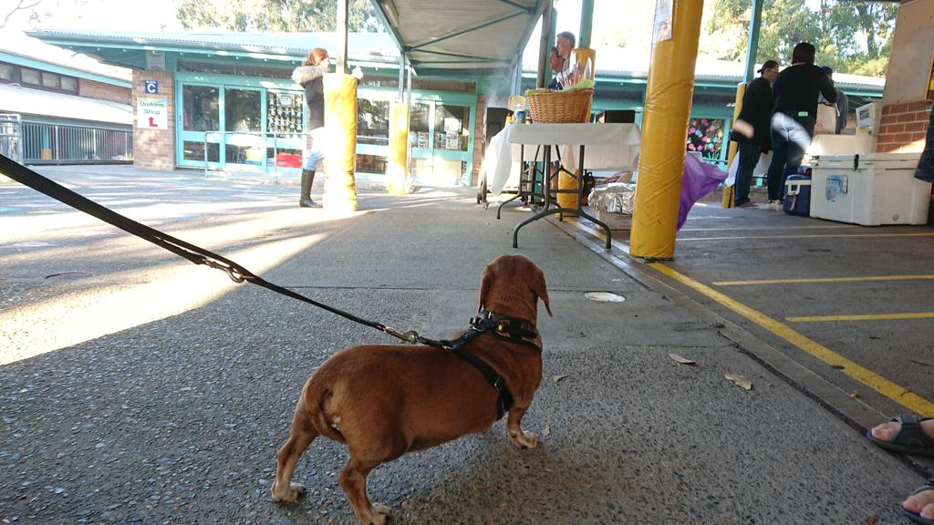 Democracy sausage dog #democracysausage