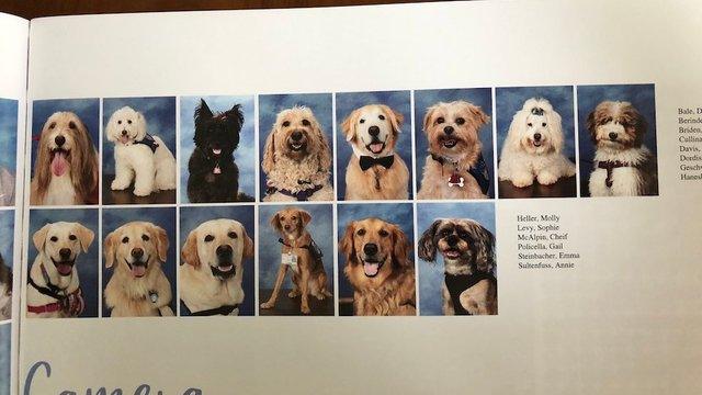 Parkland students dedicate page in yearbook to therapy dogs that helped shooting survivors http://hill.cm/pYn6B5j