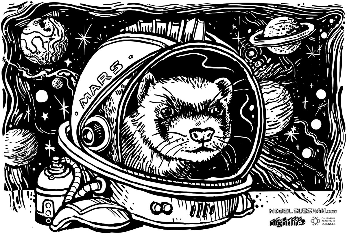 - a ferret named or going to Mars
