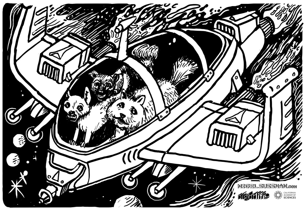 - three dogs in one spaceship