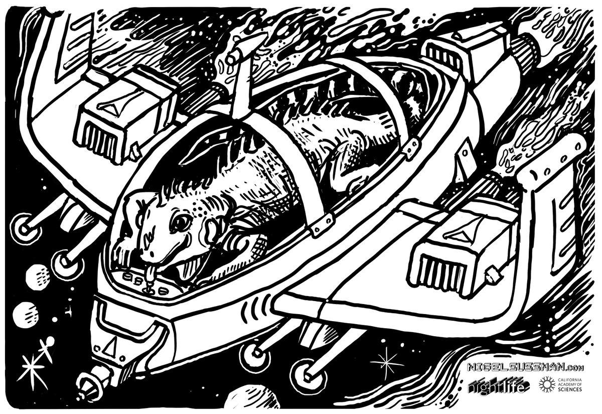 - iguana with interesting steering methods