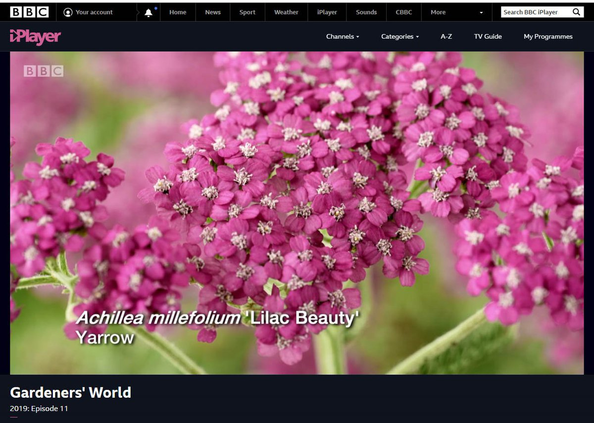 Chris Burrows's photo on #gardenersworld