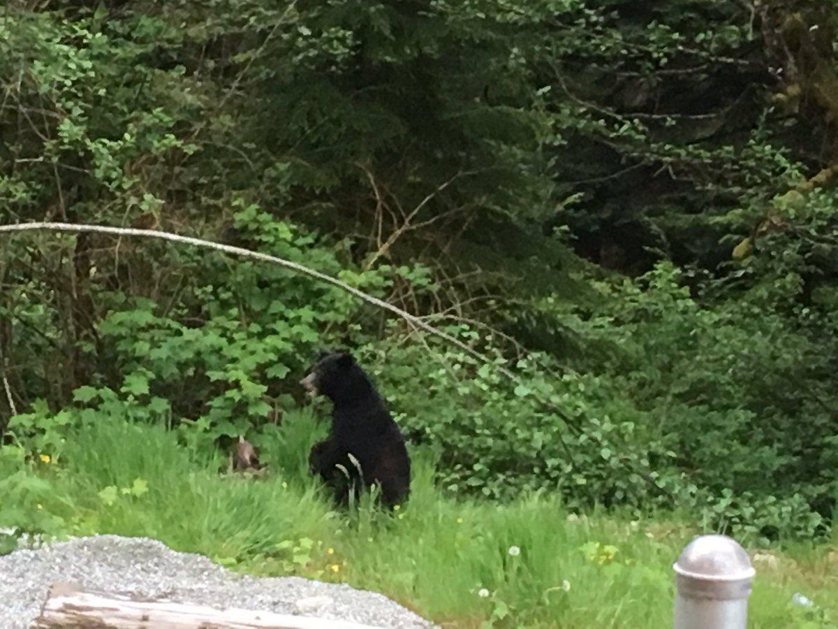 We saw a black bear today!