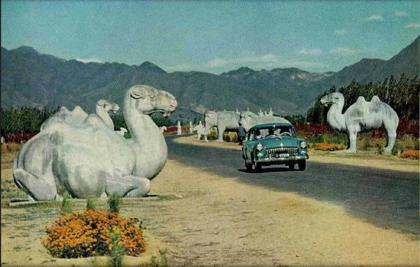 Верблюды завидуют