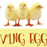 We are eagerly awaiting the arrival of the #livingeggs project starting with us on Monday 3rd June, how eggciting. 🌼🐣🐥