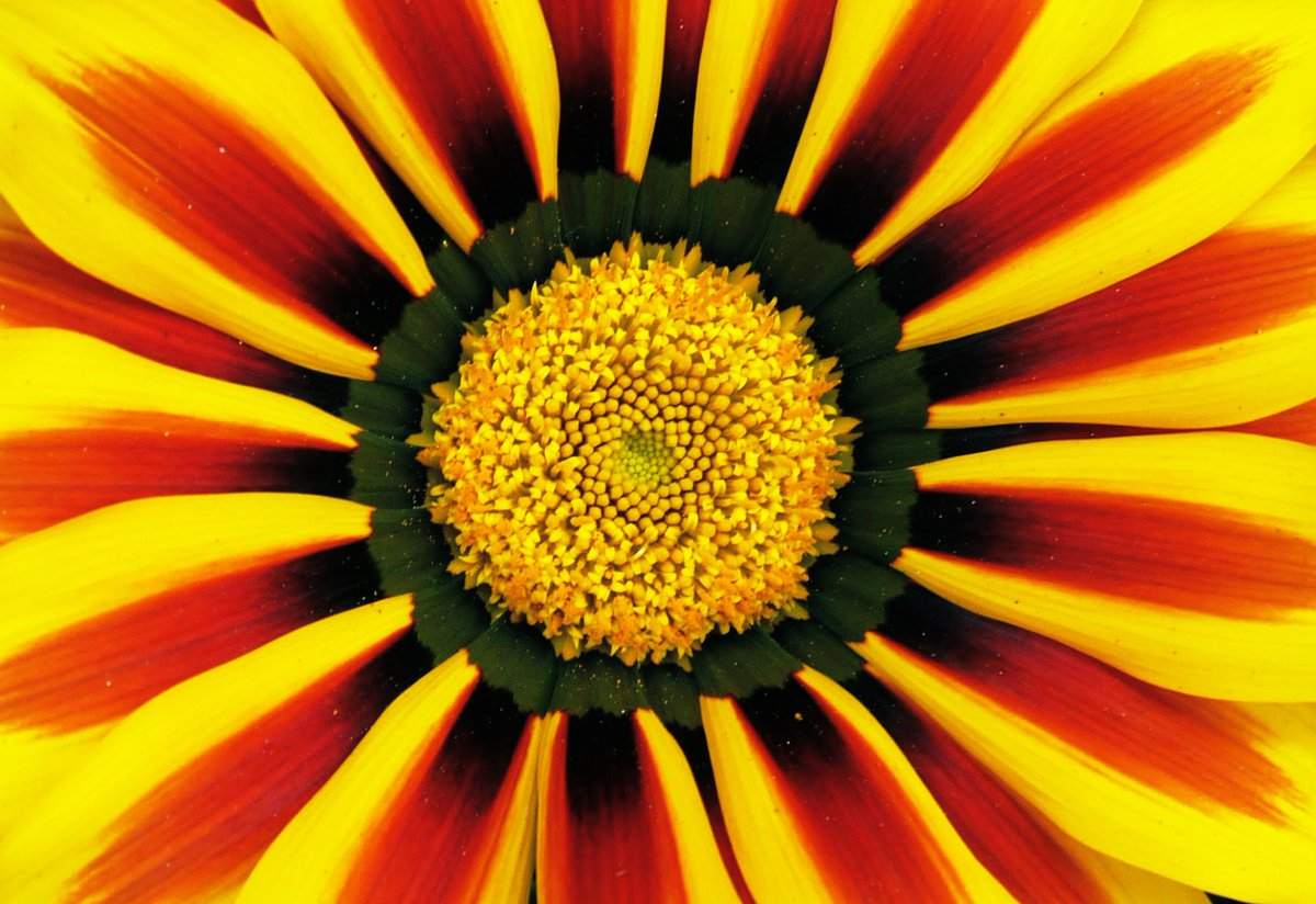 Favourite flower photo #plantsci #PlantsciArt #plantday @GlobalPlantGPC @plantspplplanet