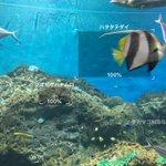 こらは便利。水族館でアプリ使ったら魚の名前がすぐわかる。