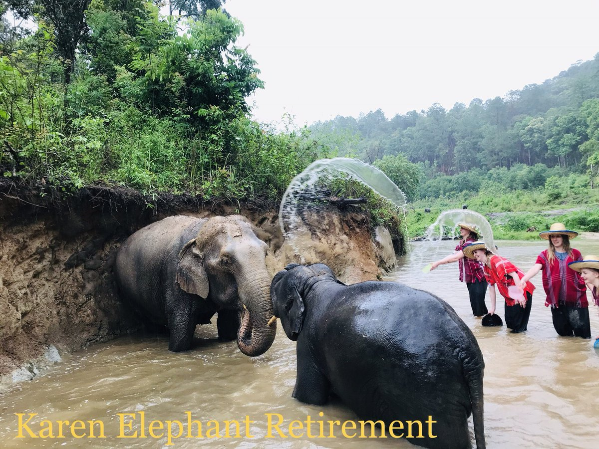 https://www.asianelephantprojects.com/book-karen-elephant-retirement/ … https://www.elephantnaturepark.org/enp/visit-volunteer/projects/karen-elephant-retirement-79/view … #KarenElephantRetirement #SaveElephantFoundation #SaddleOffProjects #BekindToElephants #AsianElephantProjects  #ElephantNatureparkpic.twitter.com/bZZpImnxc8