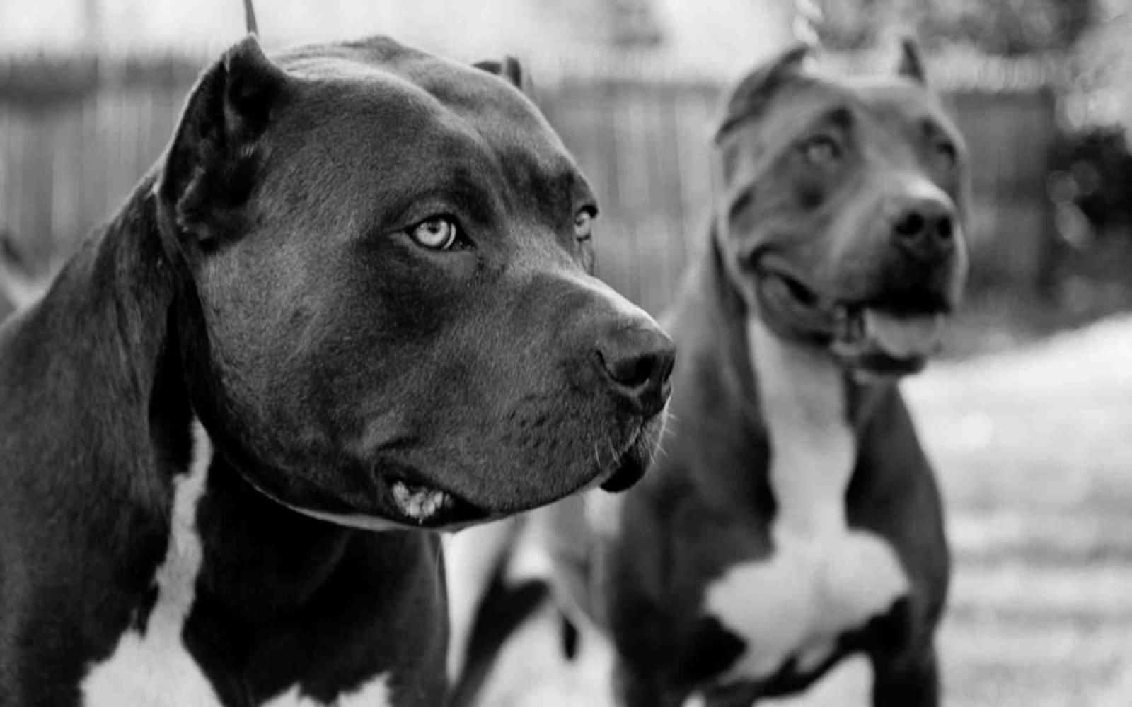 Днем рождения, картинка с надписью породы собак