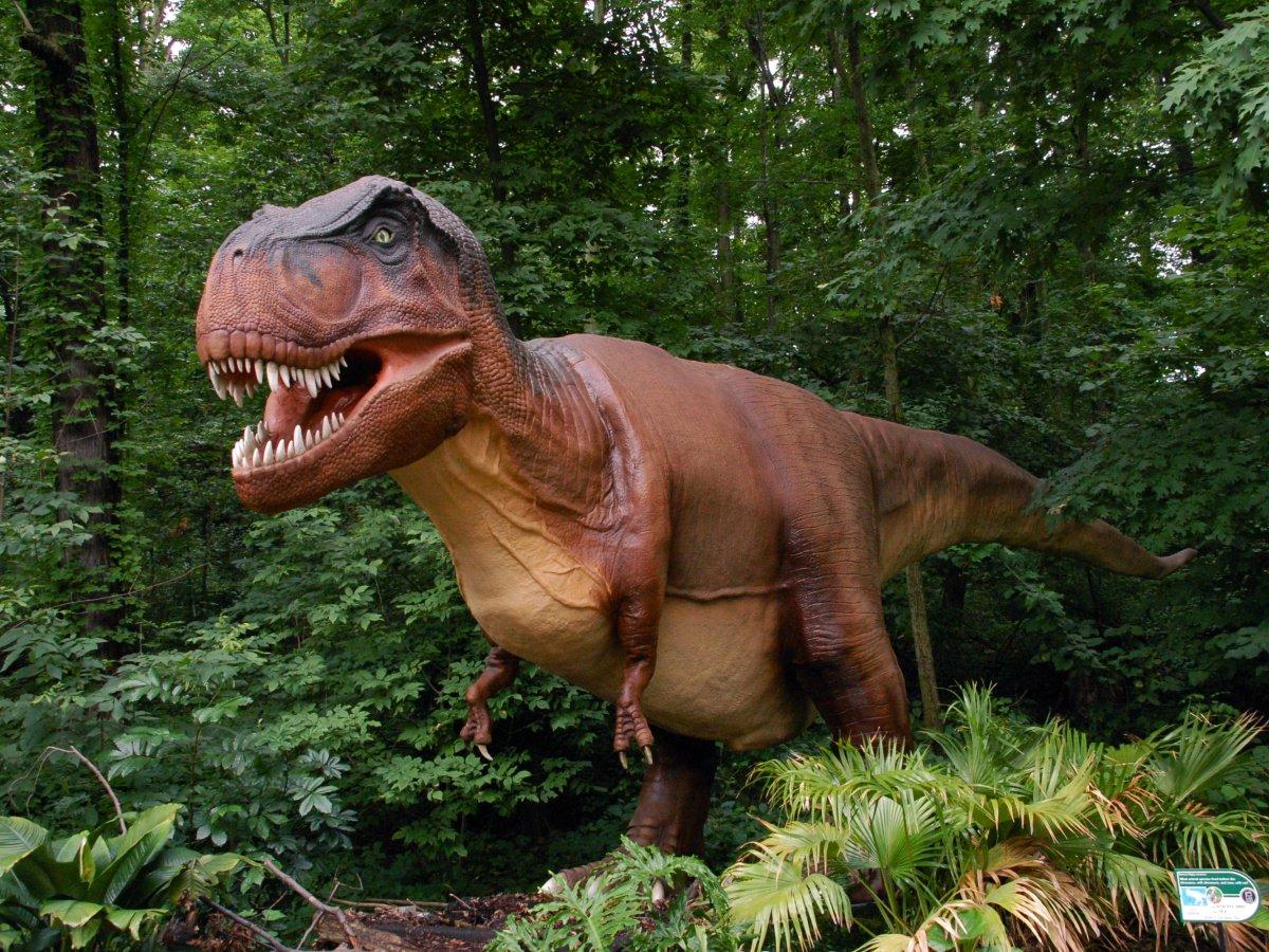 младенец фотки динозавров настоящих другое устраивало