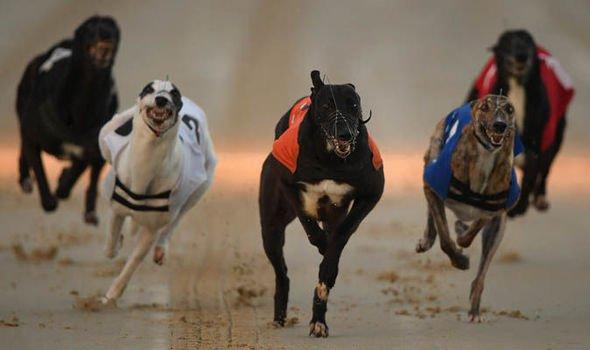 Henlow dogs bettingadvice world cup of pool 2021 betting advice