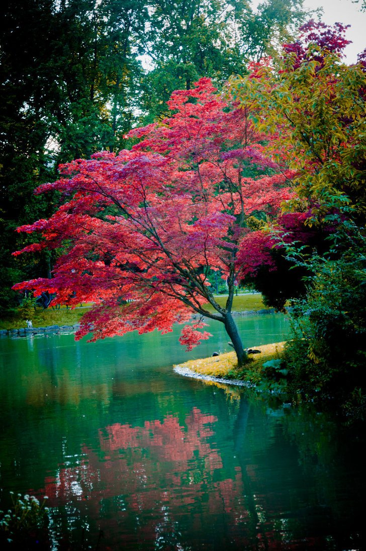 Lost for words, in dreams, Answers we seek under the A beautiful tree by the pond of memory. Hearts in pain do still entreat God inhabits over the waters Seek Him out through the knots From your Heart. Dismiss all uncertainty to the Questions we raise Whispering, I Love you.