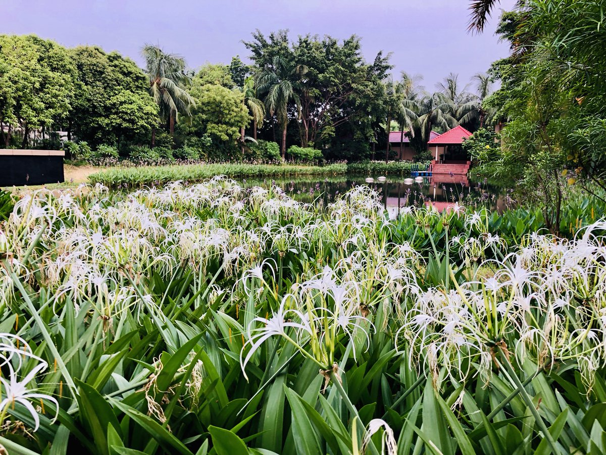 test Twitter Media - Little hangout with my peers! And this is right in the center of Dhaka, 10min ride for me from home!#Dhaka #Iftar #Bangladesh #Nature #plant #green https://t.co/9GtfDvW99w