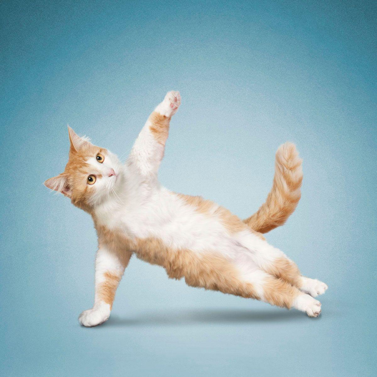 Днем, картинки смешных поз йоги