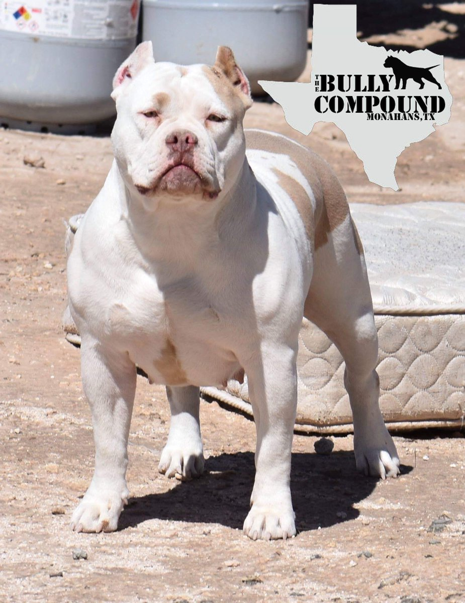 The Bully Compound - @CompoundBully Twitter Profile and