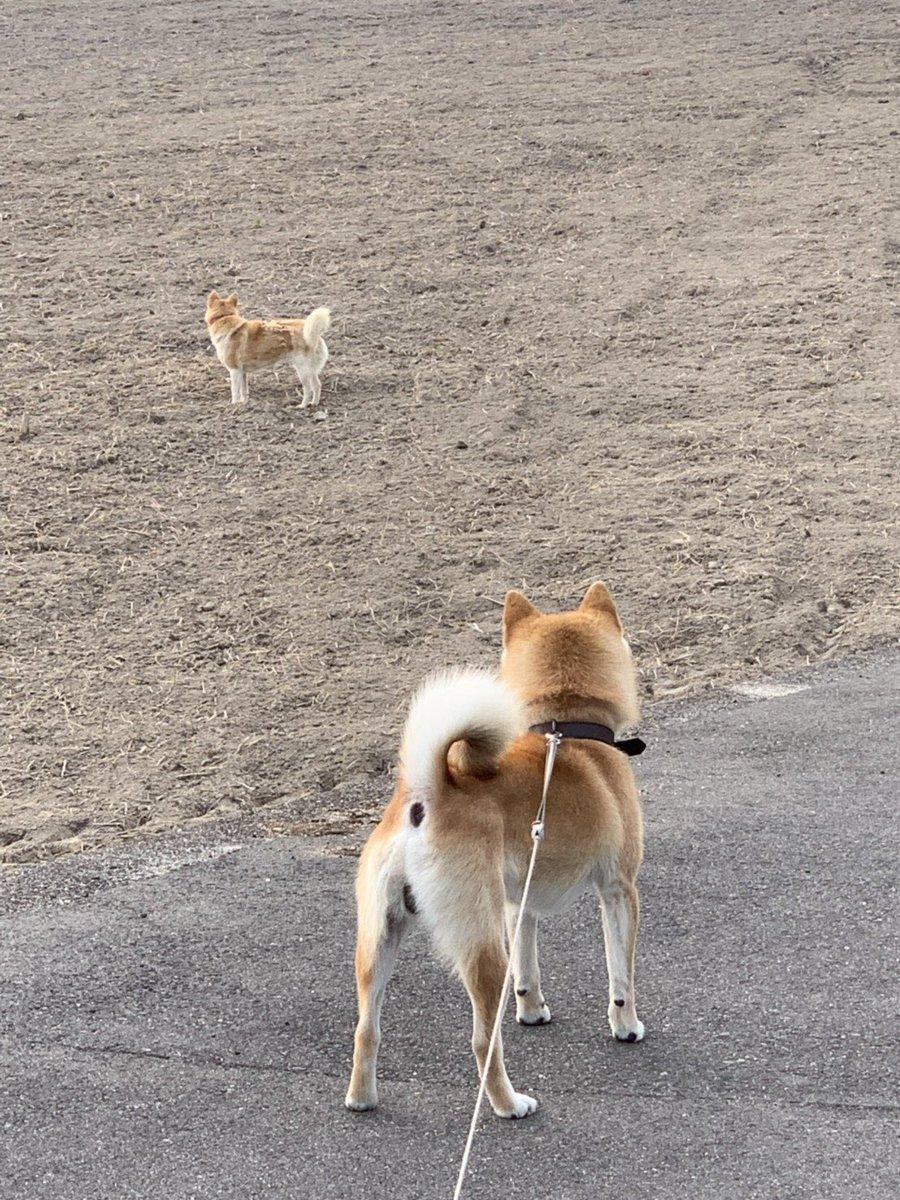 おーいっ!  お前だよ!!笑  #柴犬  #泥棒犬 pic.twitter.com/pb7wNrbsZE