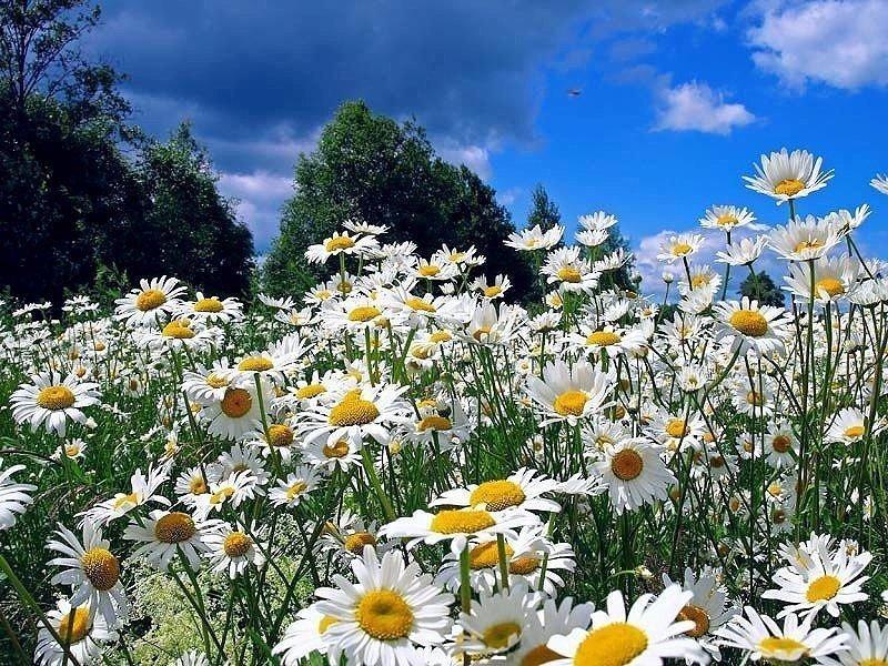 Картинки надписью, гиф открытки природа летом