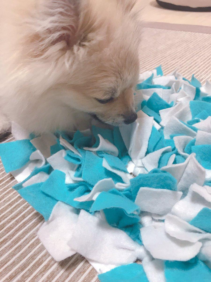 test ツイッターメディア - この前100均はしごしたときに穴あいたシリコンマットとフェルト買ってノーズワークマット作った フード隠したらフンフンにおいを嗅ぎながら探してる #ポメ #ポメラニアン #ウルフセーブル #癒し #動物 #犬 #犬のいる生活 #犬好きな人と繋がりたい #100均 #グッズ #手作り #DIY #セリア #おもちゃ https://t.co/CvEJovC709