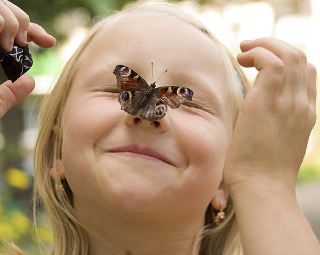 Смешные картинки с бабочками, поздравлениями