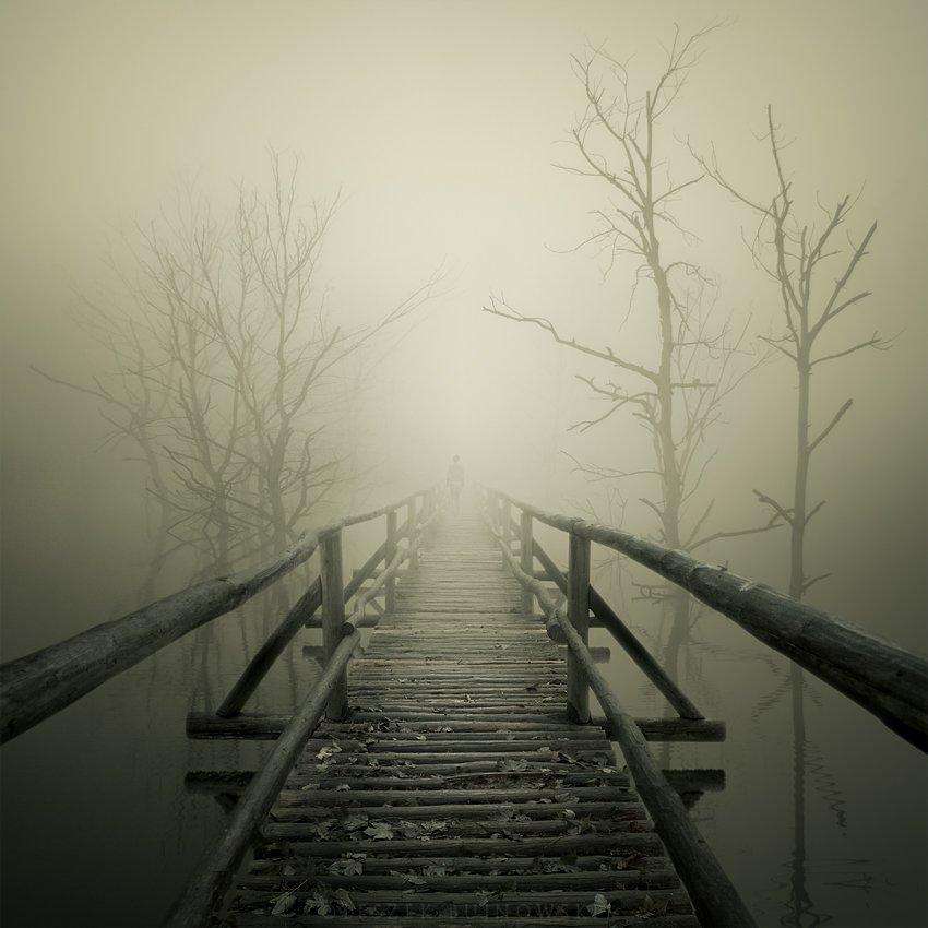 Whispers of dead trees by Leszek Bujnowski