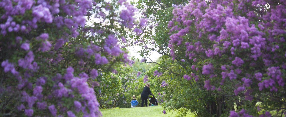 Rochester Lilac Festival 2020.Rochester Lilac Festival On Twitter The 2019 Festival Is