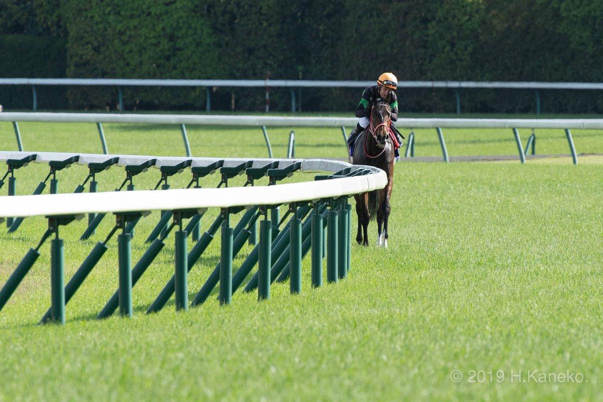 ウィニングランの様子(…ここではガッツポーズ出ず…)  #ラブズオンリーユー #優駿牝馬  #オークス #ミルコ・デムーロ