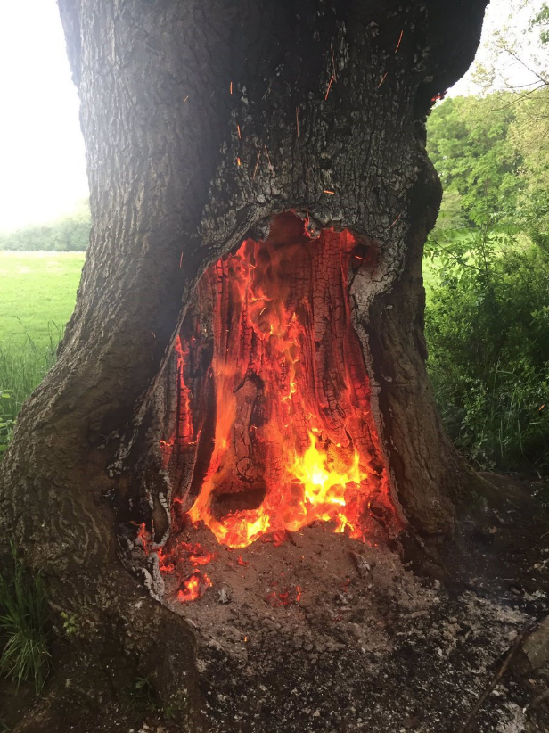 This 250-year-old oak tree has been destroyed after it was set on fire in Cannon Hill Park in Birmingham. It now has to be chopped down 😔