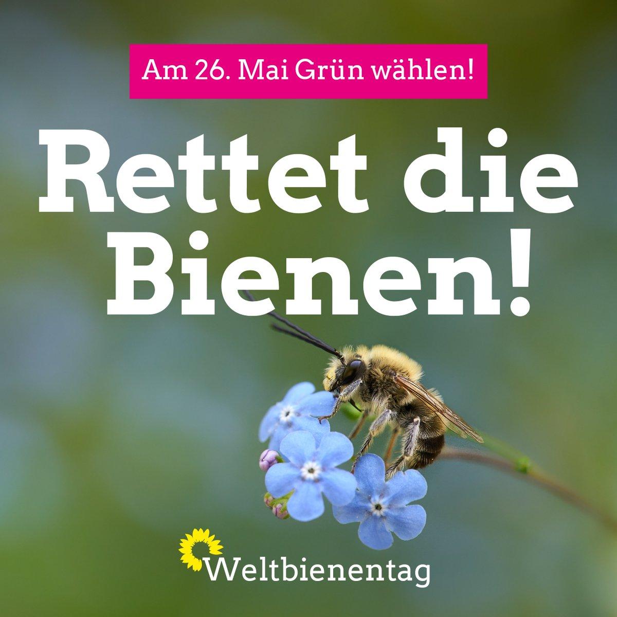 Ekin Deligöz's photo on #Bienen