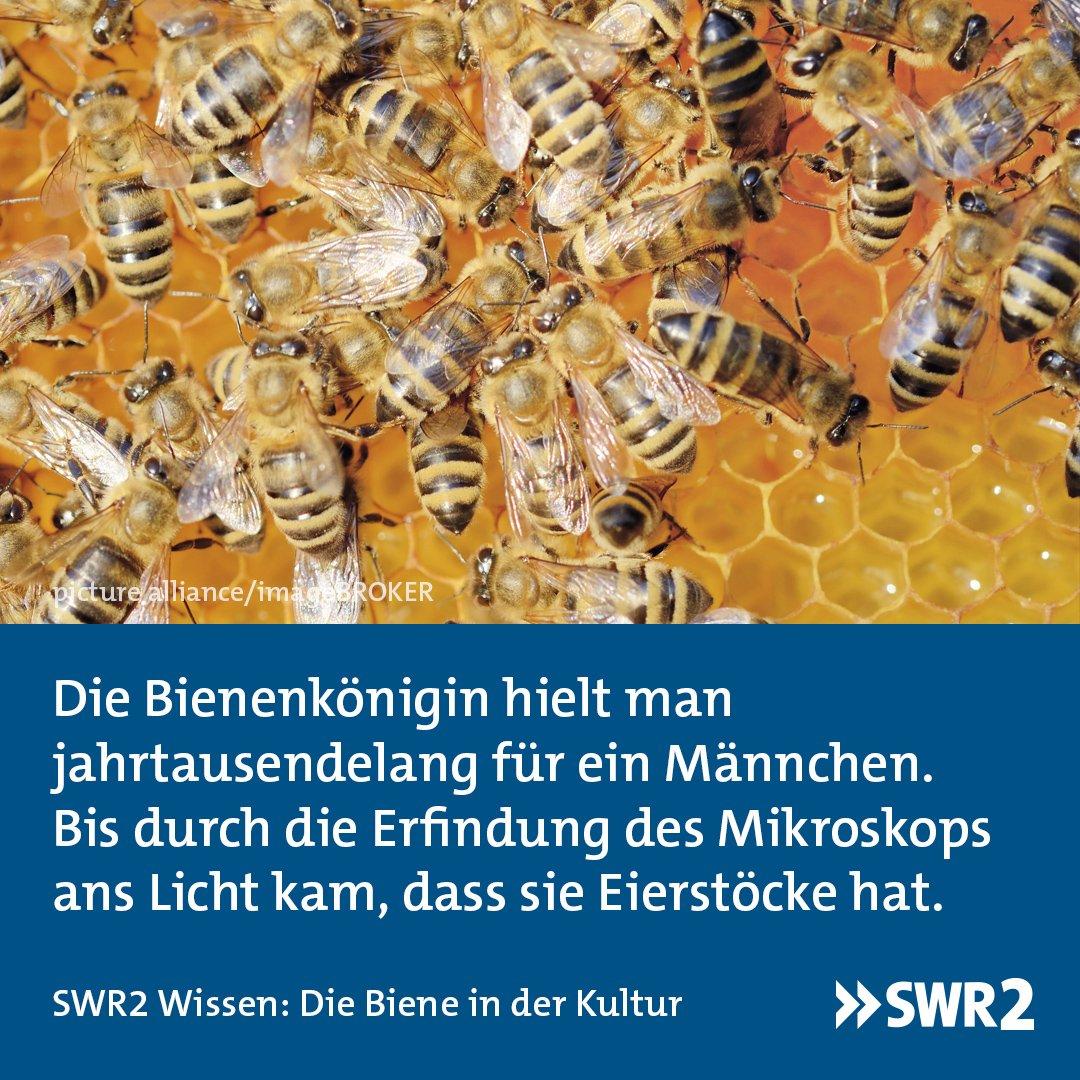 SWR2's photo on #Bienen