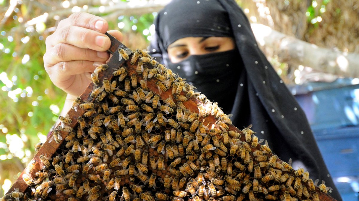 WFP deutsch's photo on #Bienen