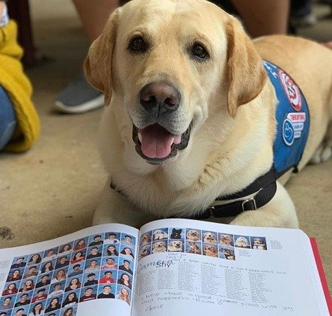 【フロリダ州】オーランドで発生した銃乱射事件により心理的なトラウマを負った高校生たち~イヤーブックには、生徒たちの心を癒やすために派遣されたコンフォート・ドッグたちの姿も。#話題犬・子犬【People】→