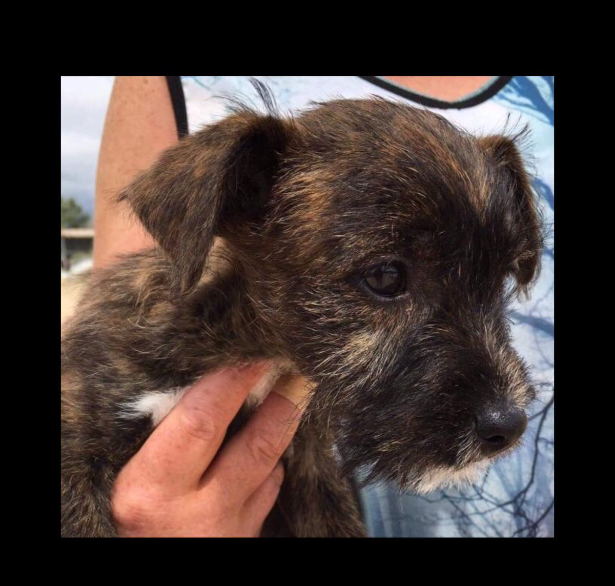 Found scared &amp; alone in #Zante, little Mustache was very #grateful to be rescued! He is a friendly, loving boy who loves to play with kids/dogs-he just want love. Can you help him find a #home in #UK #Germany #NL?   #AdoptDontShop #puppylove #dogsarefamily #dogsarejoy #puppy<br>http://pic.twitter.com/7jsk08lOmz