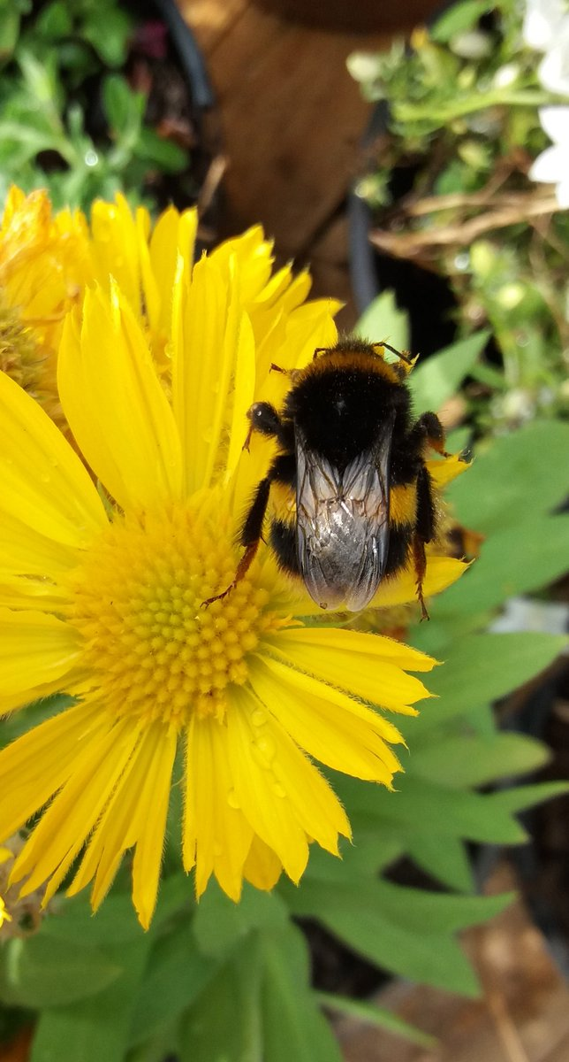 Help All Bees In Your Community on World Bee Day with all types of plants, flowers, fruit, veg and bushes and trees they help them live there lives so plant them if you can in what ever space you have. #Bees #honeybees #bumblebees #allbees #RHSChelsea