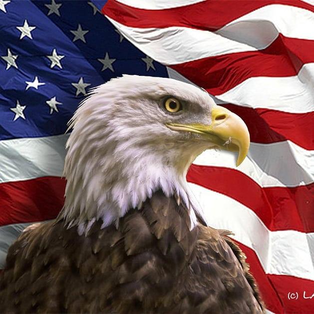 фото и картинки американский флаг герб орел