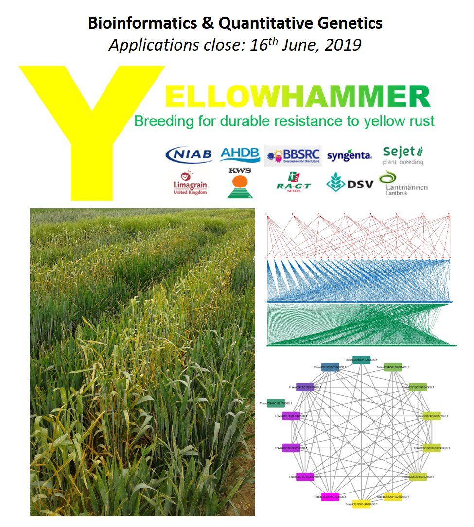 An exciting new opportunity to join the NIAB Genetics & Breeding team - Keith Gardner is recruiting a post-doc researcher in bioinformatics/quantitative genetics to contribute to a new @BBSRC project to deploy durable disease resistance in wheat breeding: https://www.niab.com/vacancies/info/432…