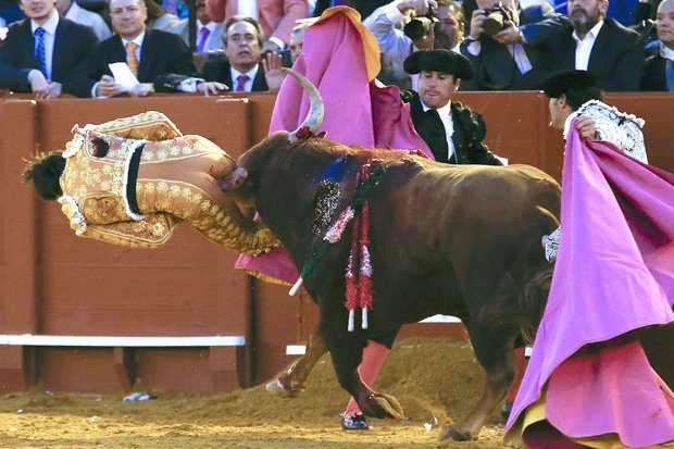 Boom! Right up the wrong &#39;un, you dirty little sequinned cunt.  #BanBullfighting <br>http://pic.twitter.com/wtEgReBgck