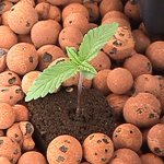 Image for the Tweet beginning: GROW YOUR MEDICINE  Soils and