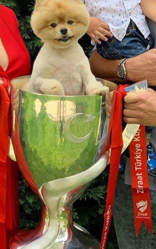 O değil de futbolcularımızın çocuklarını geçtim  Muslera'nın köpeği Oso bile   5 yıldır kupa kaldırmayan Fenerbahçe'den daha çok kupa gördü 4 yıl 6 kupa  Oso > fenerbahçe :D