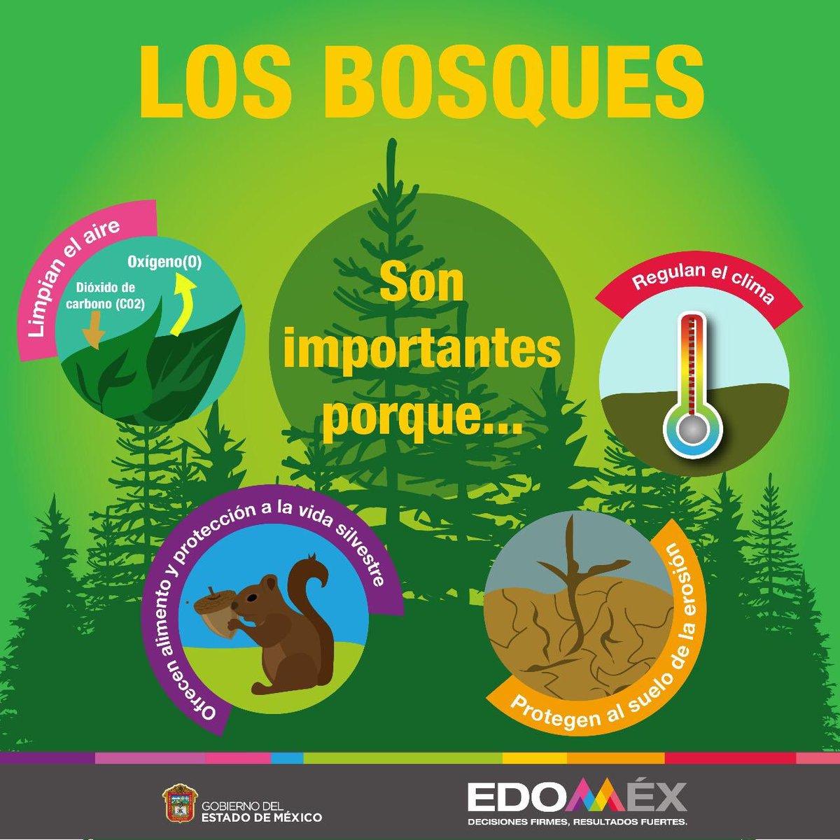 Sabes ¿Cuáles son los beneficios de los bosques?Se acerca el inicio de la temporada de reforestación, sigue las cuentas de @Probosque_ y @AmbienteEdomex para obtener más información de cómo participar con tu familia. #SinContaminaciónDelAire por un #EdoméxFuerte