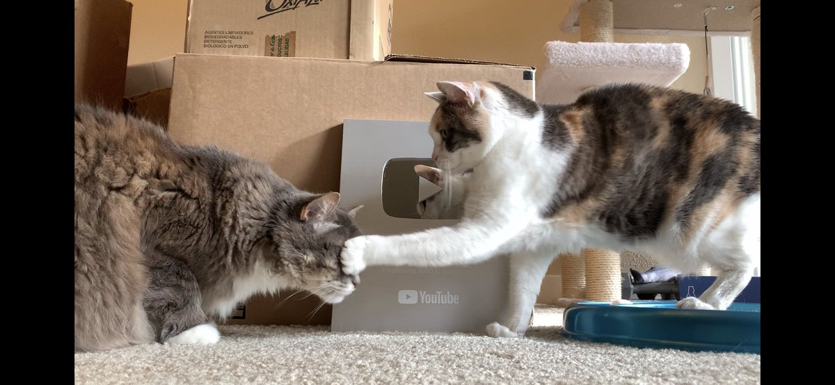 Youtube Cat Videos Youtubecats Twitter